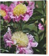 Yellow And Pink Peony Wood Print