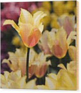Yellow And Pink Wood Print