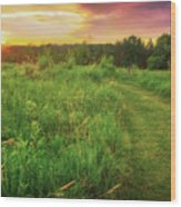 Retzer Nature Center - Yellow And Purple Summer Sunset  Wood Print