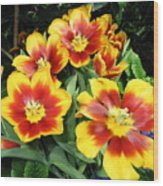 Yellow And Red Flowers Wood Print