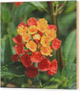 Yellow And Red Flowers On A Branch Wood Print