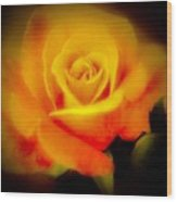 Yellow And Red Rose Wood Print