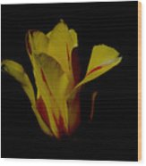 Yellow And Red Tulip Wood Print