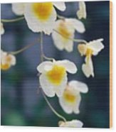 Yellow And White Cascading Flowers Wood Print