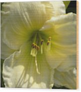 Yellow And White Daylily Wood Print