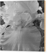 Yellow And White Iris In Bw Wood Print