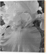 Yellow And White Iris In Bw Wood Print