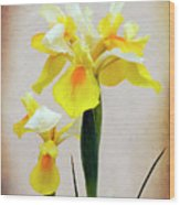 Yellow And White Iris Textured Wood Print