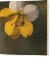 Yellow And White Monkeyflower Wood Print