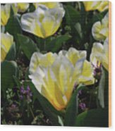 Yellow And White Tulips Flowering In A Garden Wood Print
