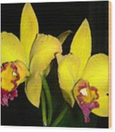 Yellow And Wine Orchids Wood Print