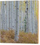 Yellow Aspen Grove Wood Print