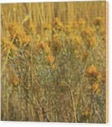 Yellow Autumn Blooming Wood Print