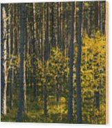 Yellow Autumn Trees In Forest Wood Print