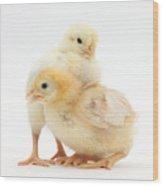 Yellow Bantam Chicks Wood Print