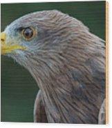 Yellow-beaked Kite Wood Print