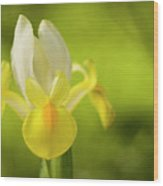 Yellow Bearded Iris Wood Print
