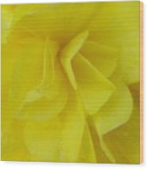 Yellow Beauty Wood Print