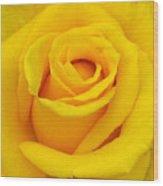 Yellow Beauty Wood Print by Mg Blackstock