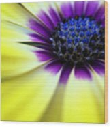 Yellow Beauty With A Hint Of Blue And Purple Wood Print