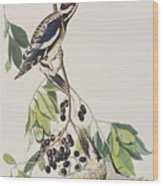 Yellow Bellied Woodpecker Wood Print