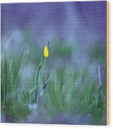 Yellow Bells Wood Print