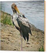 Yellow Bill Stork Wood Print