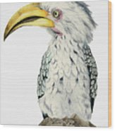 Yellow-billed Hornbill Watercolor Painting Wood Print