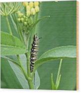 Yellow Black  White Caterpillar Wood Print