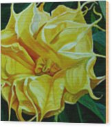 Yellow Blast Wood Print