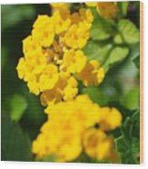 Yellow Blooms Wood Print