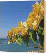 Yellow Bougainvillea Over The Mediterranean On The Island Of Cyprus Wood Print