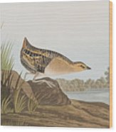 Yellow-breasted Rail Wood Print