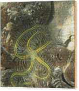 Yellow Brittle Star Under The Dock Wood Print