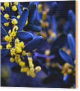 Yellow Bursts In Blue Field Wood Print