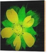 Yellow Buttercup On Black Background Wood Print