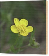 Yellow Buttercup Wood Print