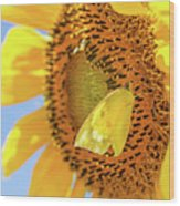 Yellow Butterfly And Sunflower Wood Print