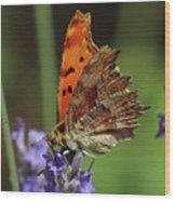 Yellow Butterfly No.2 Wood Print