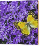 Yellow Butterfly On Mee Wood Print