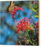 Yellow Butterfly On Red Flowers Wood Print
