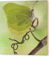 Yellow Butterfly On The Branch Wood Print