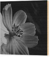 Yellow-bw-1 Wood Print