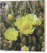 Yellow Cactus Blooms Wood Print