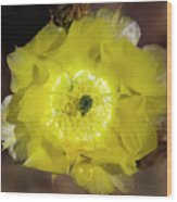 Yellow Cactus Flower Wood Print