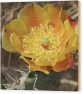 Yellow Cactus Flower On Display Wood Print