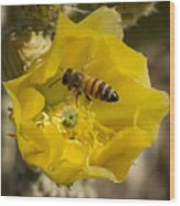 Yellow Cactus Flower With Wasp Wood Print