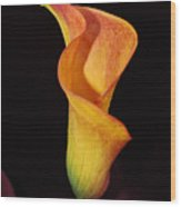 Yellow Calla Lily Flower 53 Wood Print