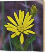 Yellow Camphorweed Wood Print