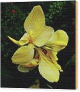 Yellow Canna  Wood Print
